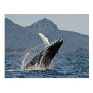 violación de la ballena postal