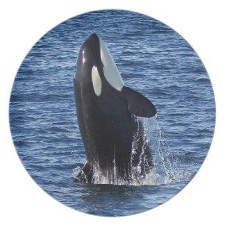 Violación de la placa fotográfica de la orca (orca plato de comida
