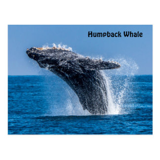 Violación de la postal de la ballena jorobada