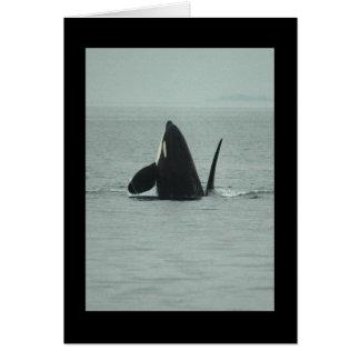 Violación de la tarjeta de felicitación de la orca
