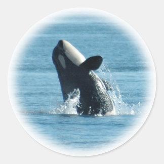 Violación de los pegatinas de la orca pegatina redonda