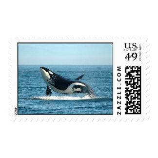 Violación de sellos de la ballena