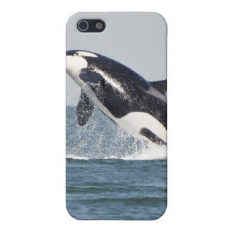 Violación del caso del iPhone 4 de la orca iPhone 5 Carcasa