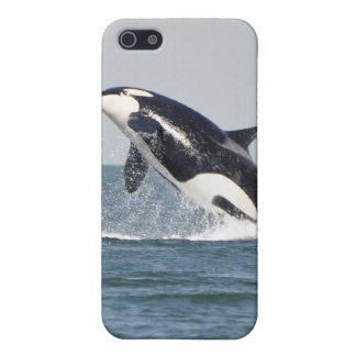 Violación del caso del iPhone 4 de la orca iPhone 5 Funda