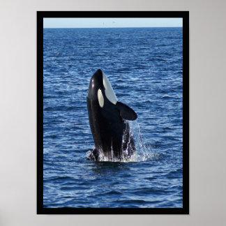 Violación del poster de la orca (orca)