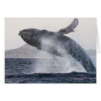 Violando la ballena jorobada #2, esconda dentro tarjeta de felicitación