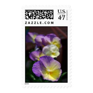 Violas Postage