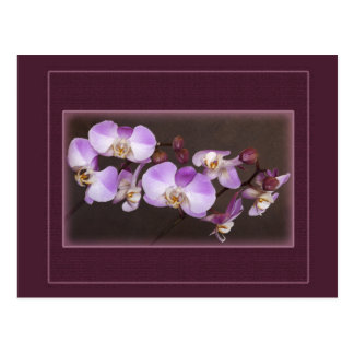 Violet and White Orchid Close Up Photograph Post Cards