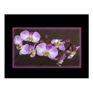 Violet and White Orchid Close Up Photograph Postcards