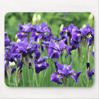 Violet Blue Siberian Iris, Ceasar's Brother Mouse Pad