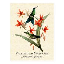 Violet Capped Wood Nymph Hummingbird Art Postcard