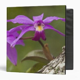 Violet Cattleya Orchid Cattleya violacea) 3 Ring Binder