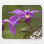 Violet Cattleya Orchid Cattleya violacea) Mouse Pad