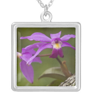 Violet Cattleya Orchid Cattleya violacea) Square Pendant Necklace
