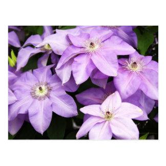 Violet Clematis Postcard