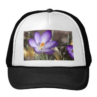 Violet Crocus from Above Trucker Hats