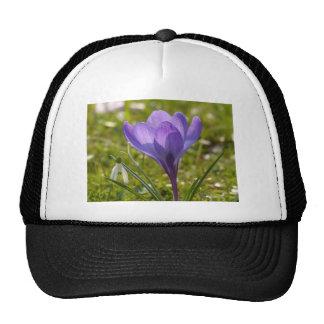 Violet Crocus Trucker Hat