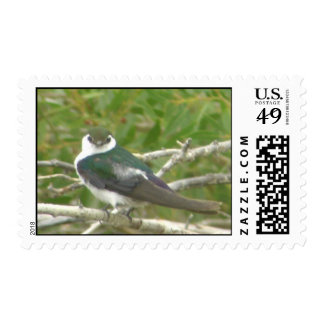 Violet-green Swallow Postage