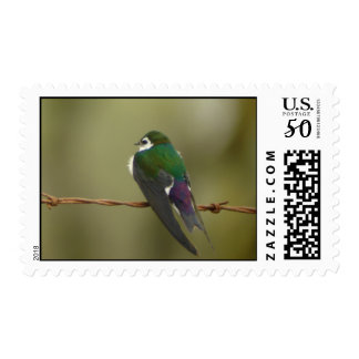 Violet-green Swallow Stamp