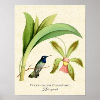 Violet Headed Hummingbird Art Print Poster