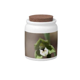 Violet Helleborine (Epipactis purpurata) Candy Jars