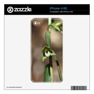 Violet Helleborine (Epipactis purpurata) iPhone 4S Decals