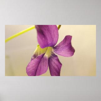 Violet I Poster