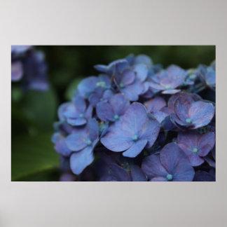 Violet in Twilight Poster