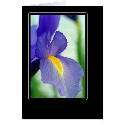 violet iris card