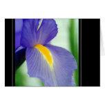 violet iris greeting cards