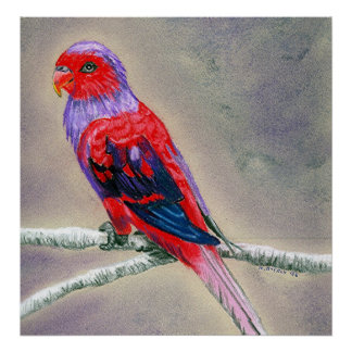 Violet Necked Lory Bird Portrait Posters