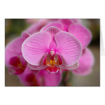 Violet Orchids Greeting Cards