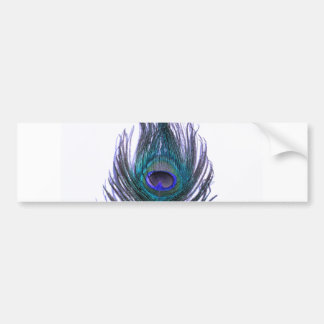 Violet Peacock Feather Bumper Sticker