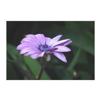 Violet Pink Flower Canvas Print