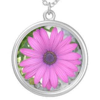 Violet Pink Osteospermum Flower Daisy Silver Plated Necklace