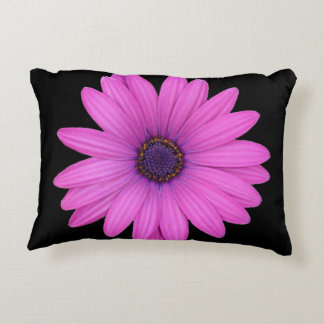 Violet Pink Osteospermum Flower Isolated on Black Accent Pillow