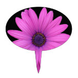 Violet Pink Osteospermum Flower Isolated on Black Cake Toppers