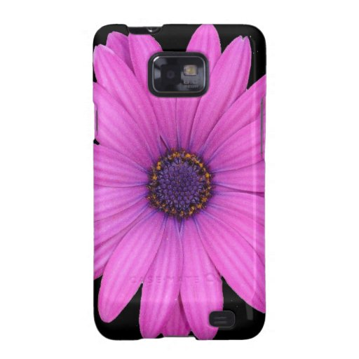 Violet Pink Osteospermum Flower Isolated on Black Samsung Galaxy S2 Covers
