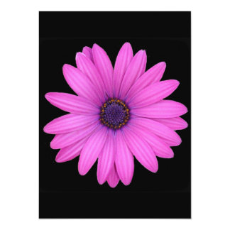 Violet Pink Osteospermum Flower Isolated on Black 5.5x7.5 Paper Invitation Card