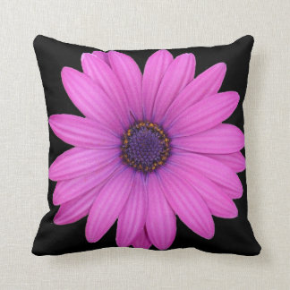 Violet Pink Osteospermum Flower Isolated on Black Throw Pillow