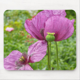 Violet Poppies / Purple Poppies Mouse Pad