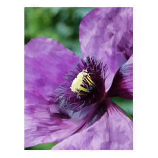 Violet Poppies / Purple Poppies Postcard