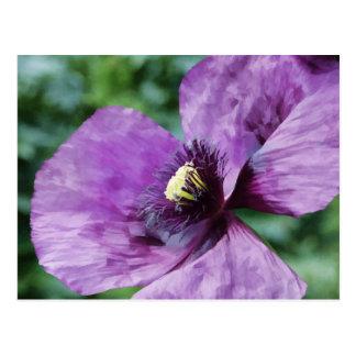 Violet Poppy Postcard
