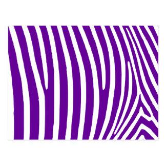 Violet Purple Zebra Stripes Postcard