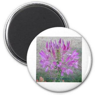 Violet Queen Cleome Fridge Magnet