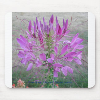 Violet Queen Cleome Mouse Pad