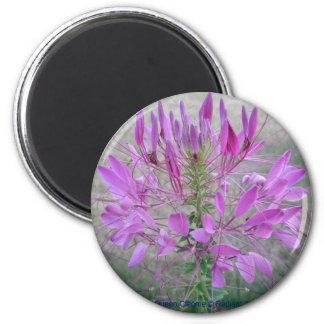 Violet Queen Cleome Refrigerator Magnet