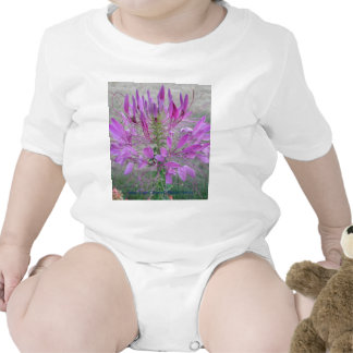 Violet Queen Cleome Tshirt