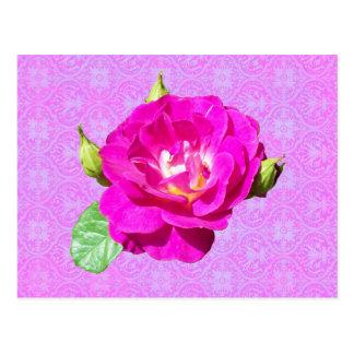 Violet Rose Damask Postcard