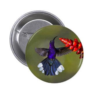 Violet Sabrewing Hummingbird Pinback Buttons